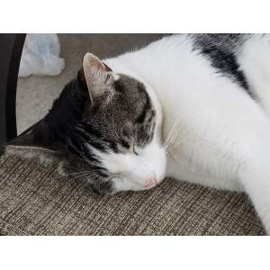 1SleepyKitty's picture