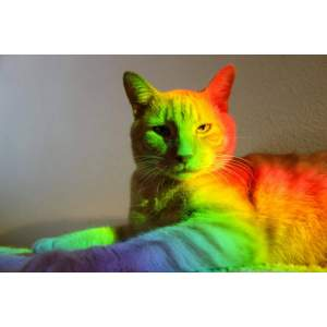 rainbow cat's picture